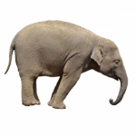 Profile picture of ELEPHANT